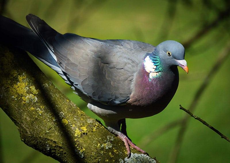 Birds Pest Control in Yorkshire