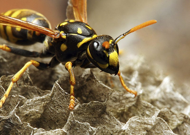 Insect Pest Control in Yorkshire