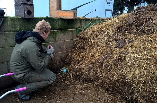 pest control on an equistrian yard against rats