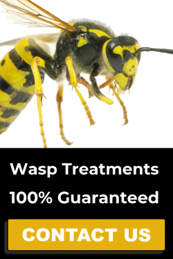 Wasp control services button