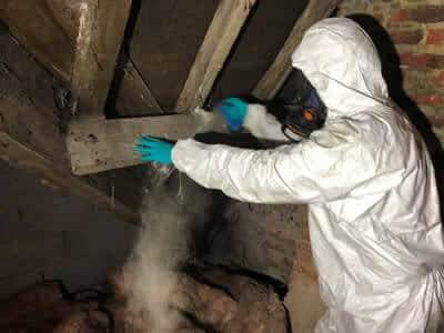 Domestic pest control Wetherby Harrogate York