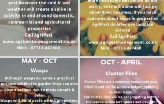 Pest control Info-graphic