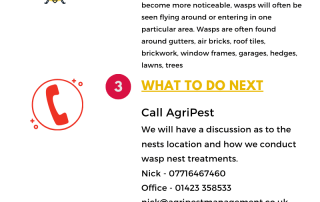 Wasp removal steps
