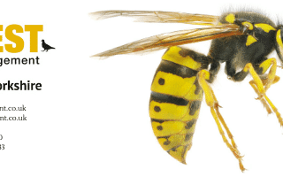 wasp nest removal Wetherby